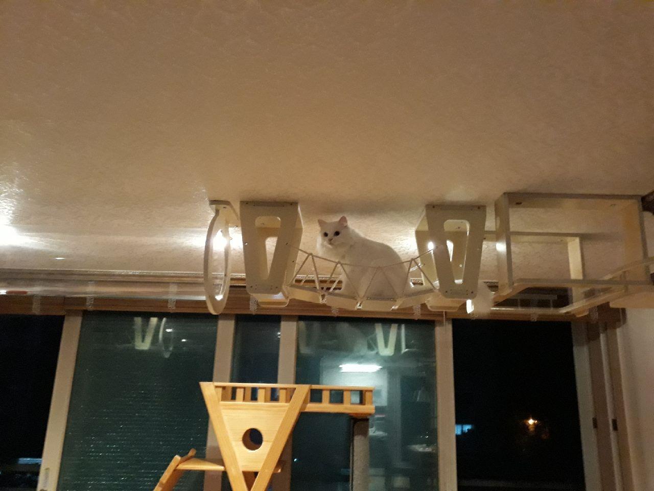 프리미엄 고양이 원목 투명 놀이터 주문제작 출장시공