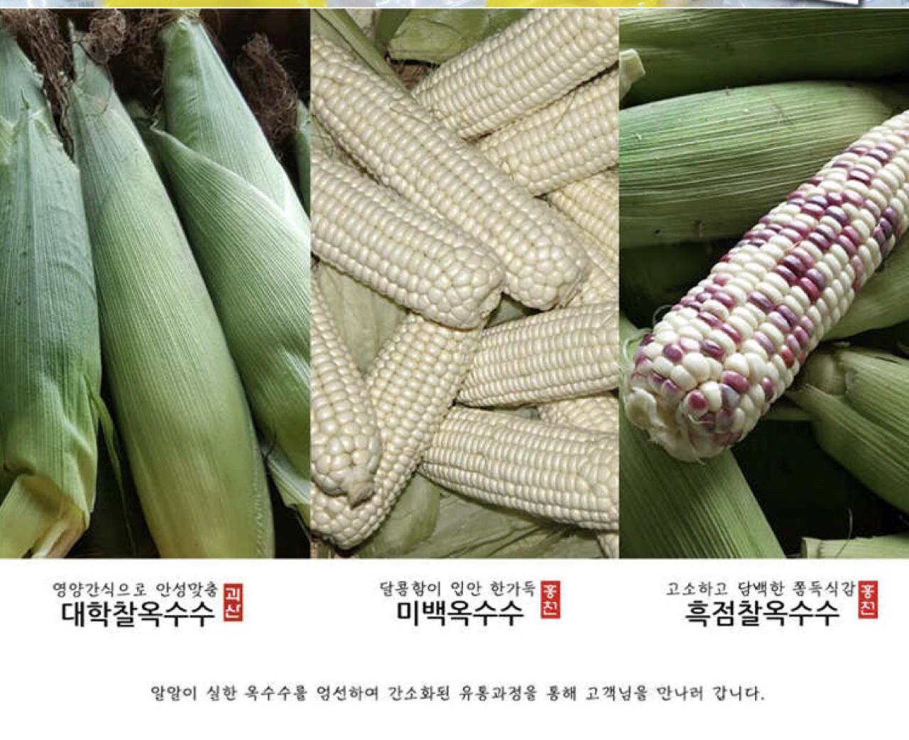 [무료배송] 괴산대학 찰/미백/흑점 냉동 옥수수 판매