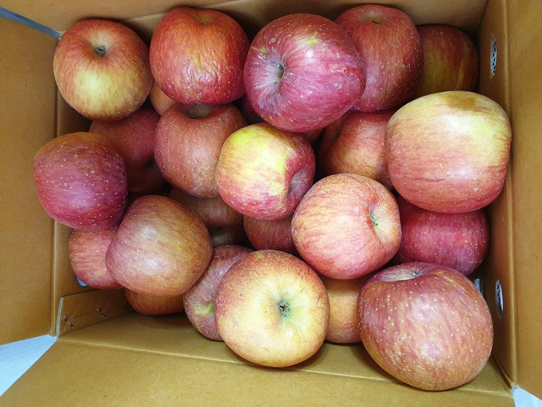 골은 사과 무료