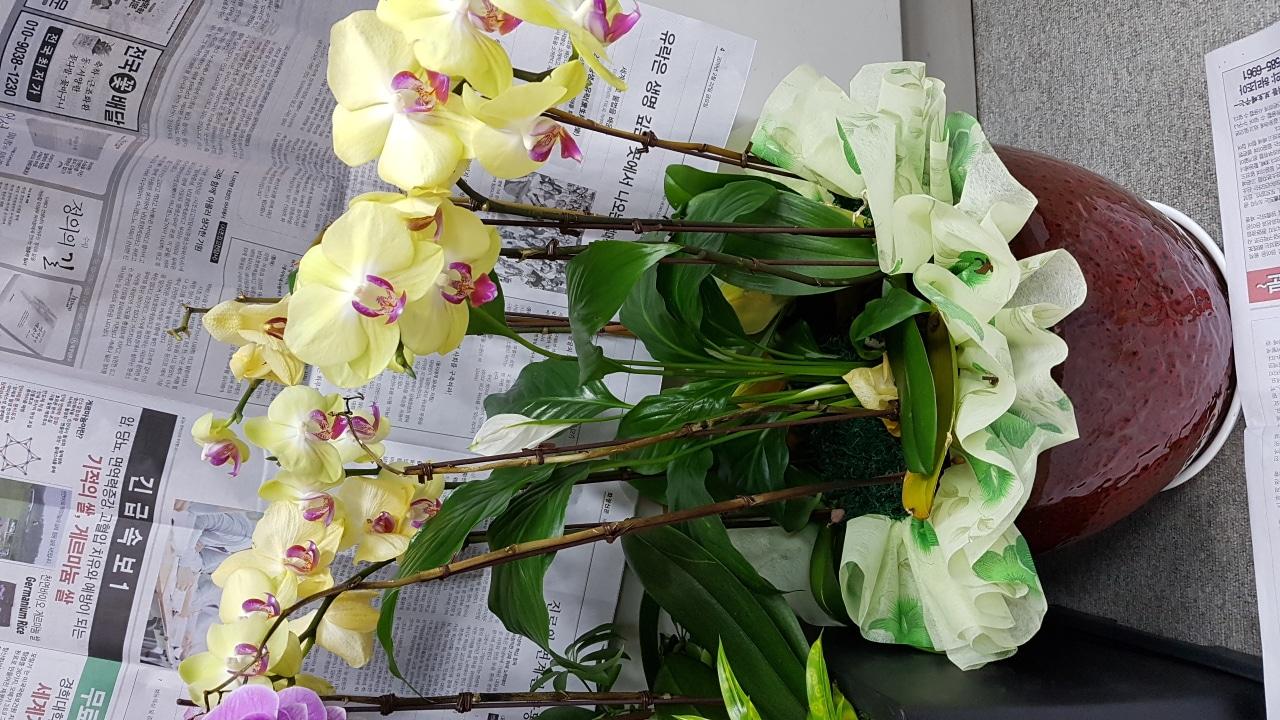 꽃 화분 팝니다