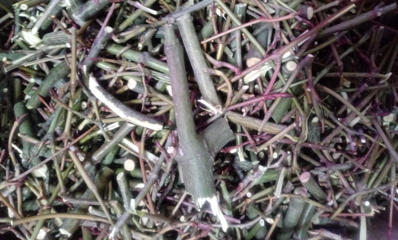 자연산 벌나무 1kg