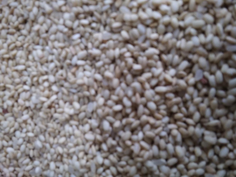 묻은찰현미쌀이애요아무이상없지만새먹이나동물사료로쓰실분