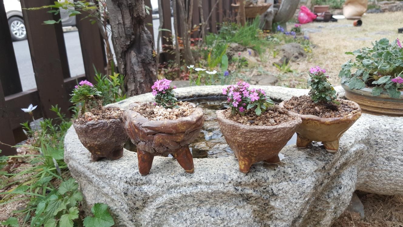 꽃화분(암담초)