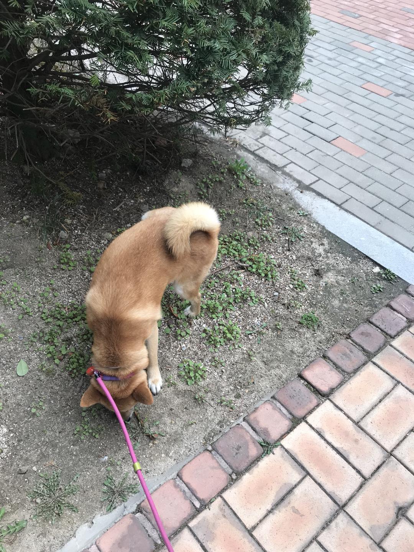 강아지 호텔링/펫시터/ 소수케어