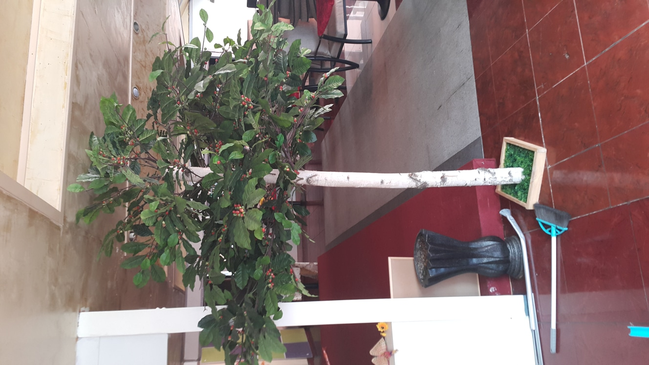 인테리어 나무 에눌 에누리 네고 가격 조정 가능 무료 나눔 덤 고급 화분 그냥 드려요 서울 목동