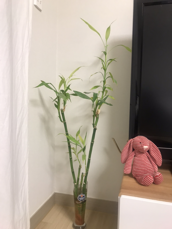 식물만 나눔해요~