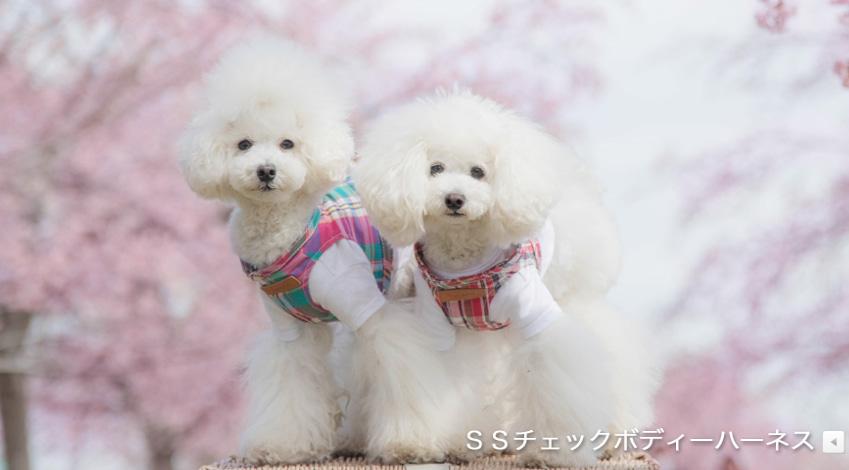 마지막 가격내림-하네스 가슴줄 새상품 - 일본 toto&pal 제품 - 19.4.20일 일본에서 직접 구매한 제품