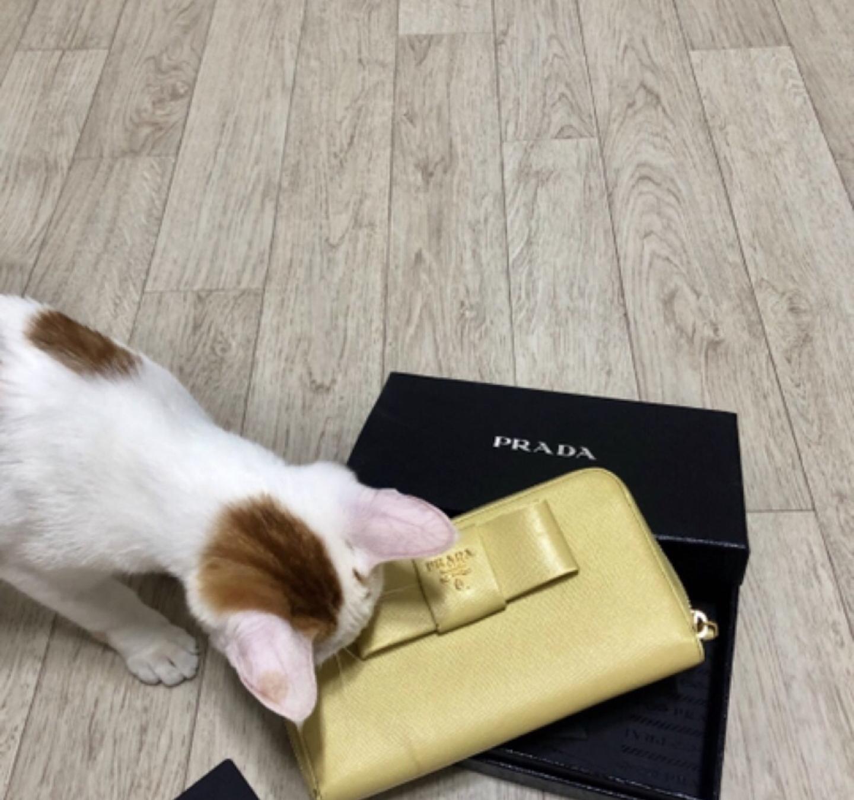 프라다 사피아노 리본 장지갑