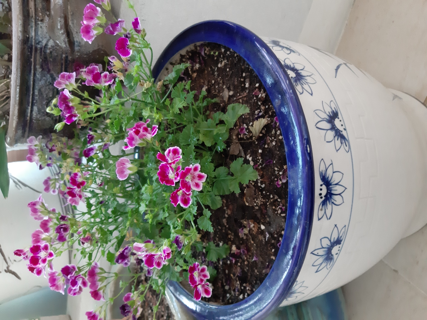 다년생 꽃