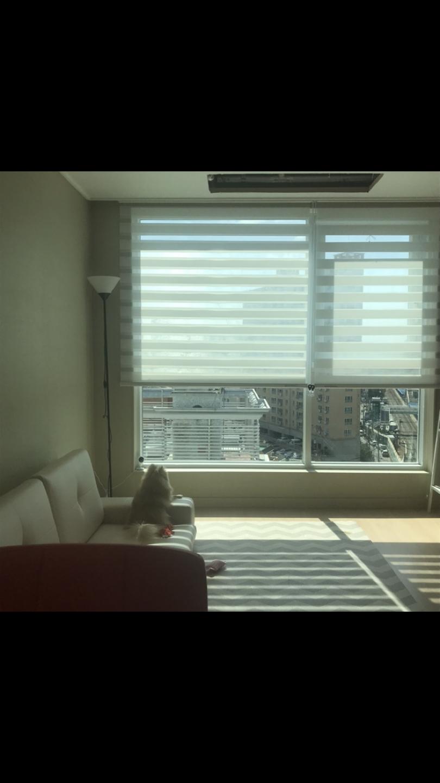 창문 블라인드 커튼