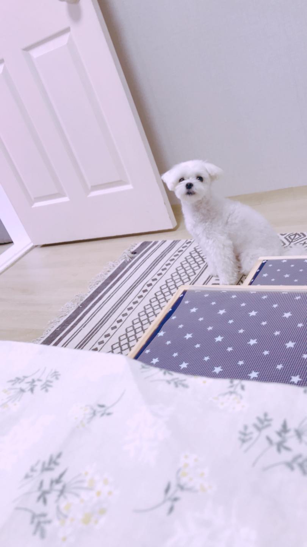 원목 수납형 강아지 계단