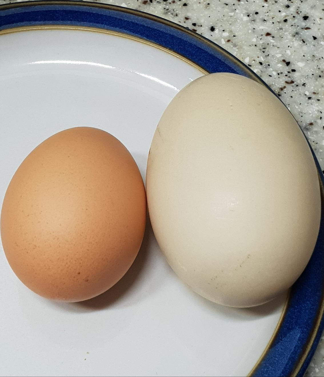 기러기알(사향오리알)유정란