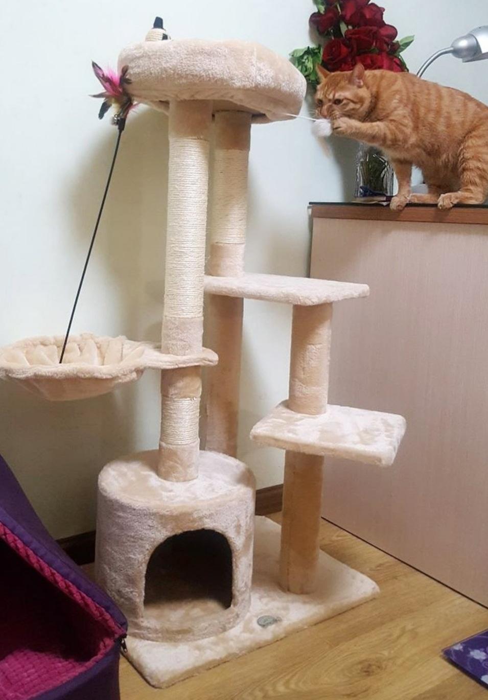 [무료나눔]고양이 캣타워 무료나눔합니다