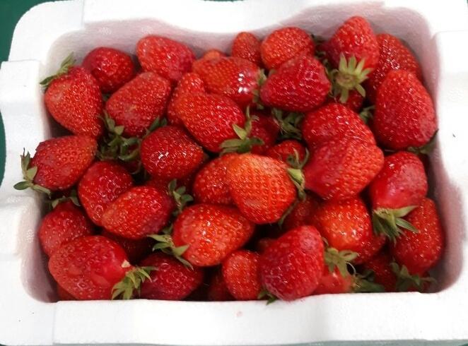 딸기쨈용 딸기 팔아요
