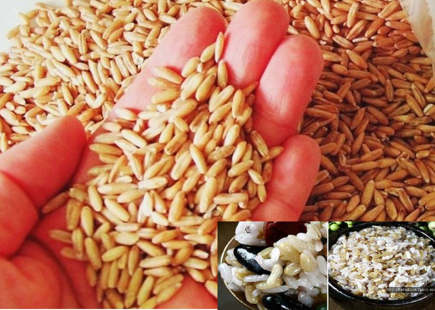 다이어트건강최고 캐나다(오트)귀리쌀판매  20kg30000  40kg55000