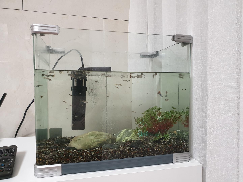 물고기(구피)어항셋트