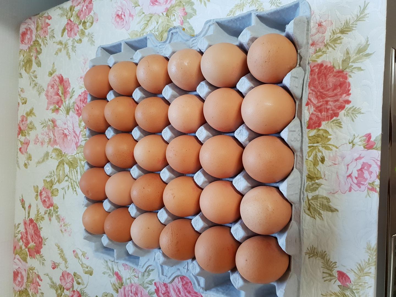 싱싱한 계란 한판 30개