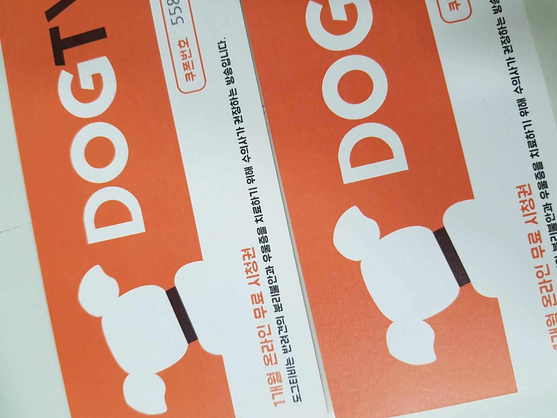 도그티비 DOG TV 1개월 무료 시청 쿠폰 번호