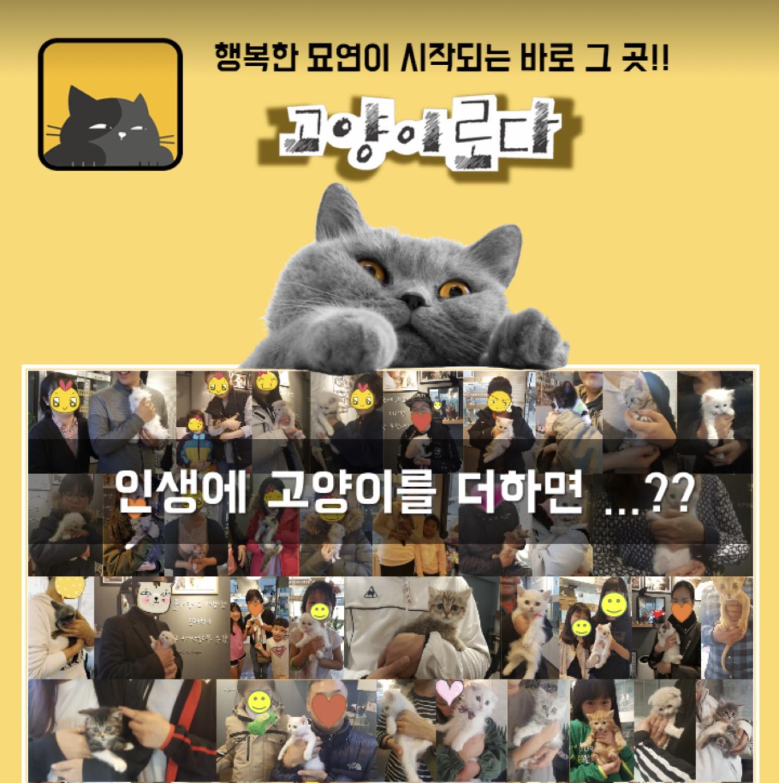 행복한 고양이와의 사랑스러운 묘연!!!