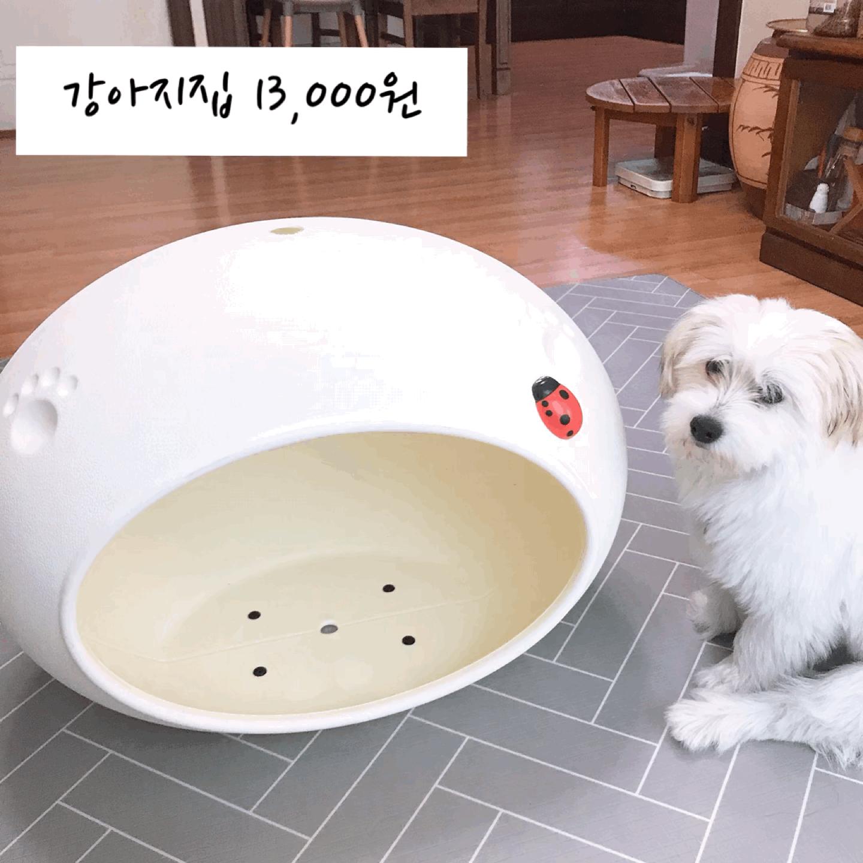 강아지 집