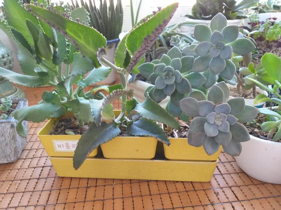 여러가지 식물 화초