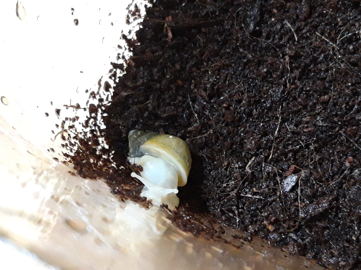 달팽이 사육 세트