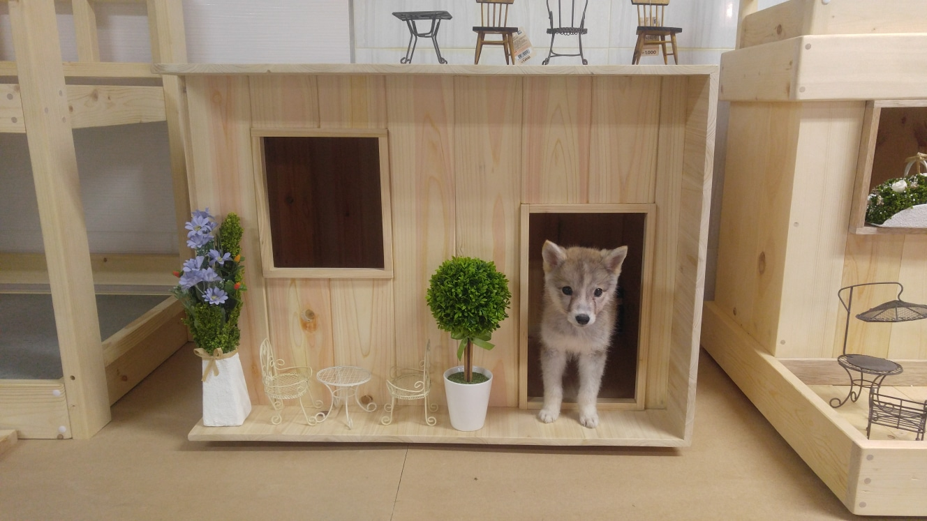 편백나무 애완견 하우스(개집팔아요ㅋ)7만원에급처분합니다