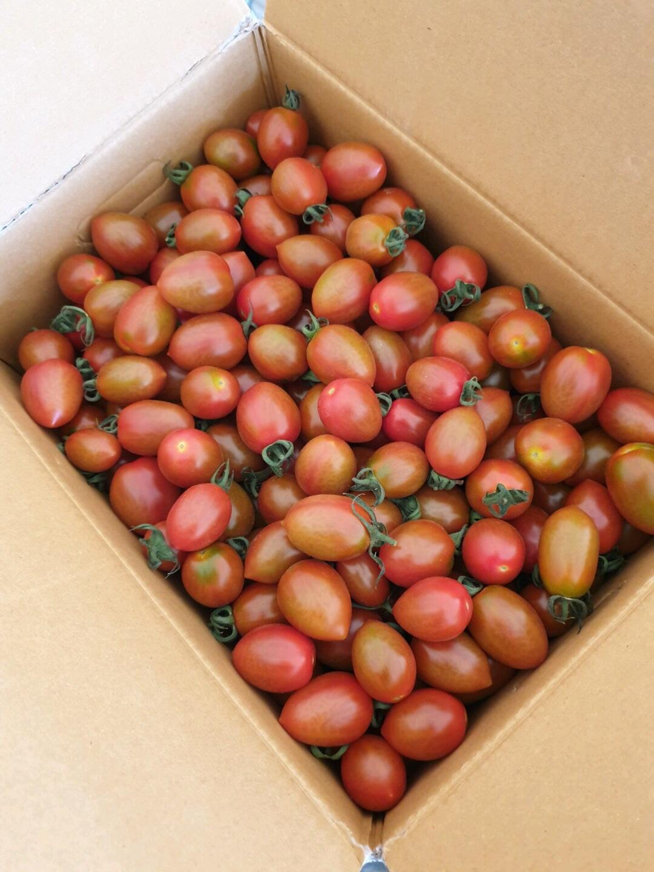 무농약 짭짤이 대추방울토마토 5kg