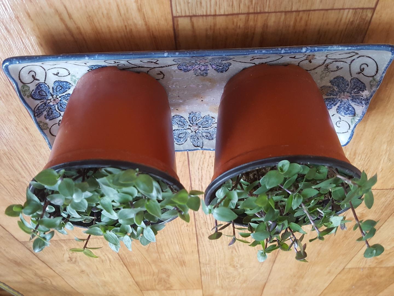 예쁜화초 두개
