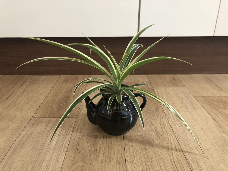 식물이름좀 가르쳐주세요