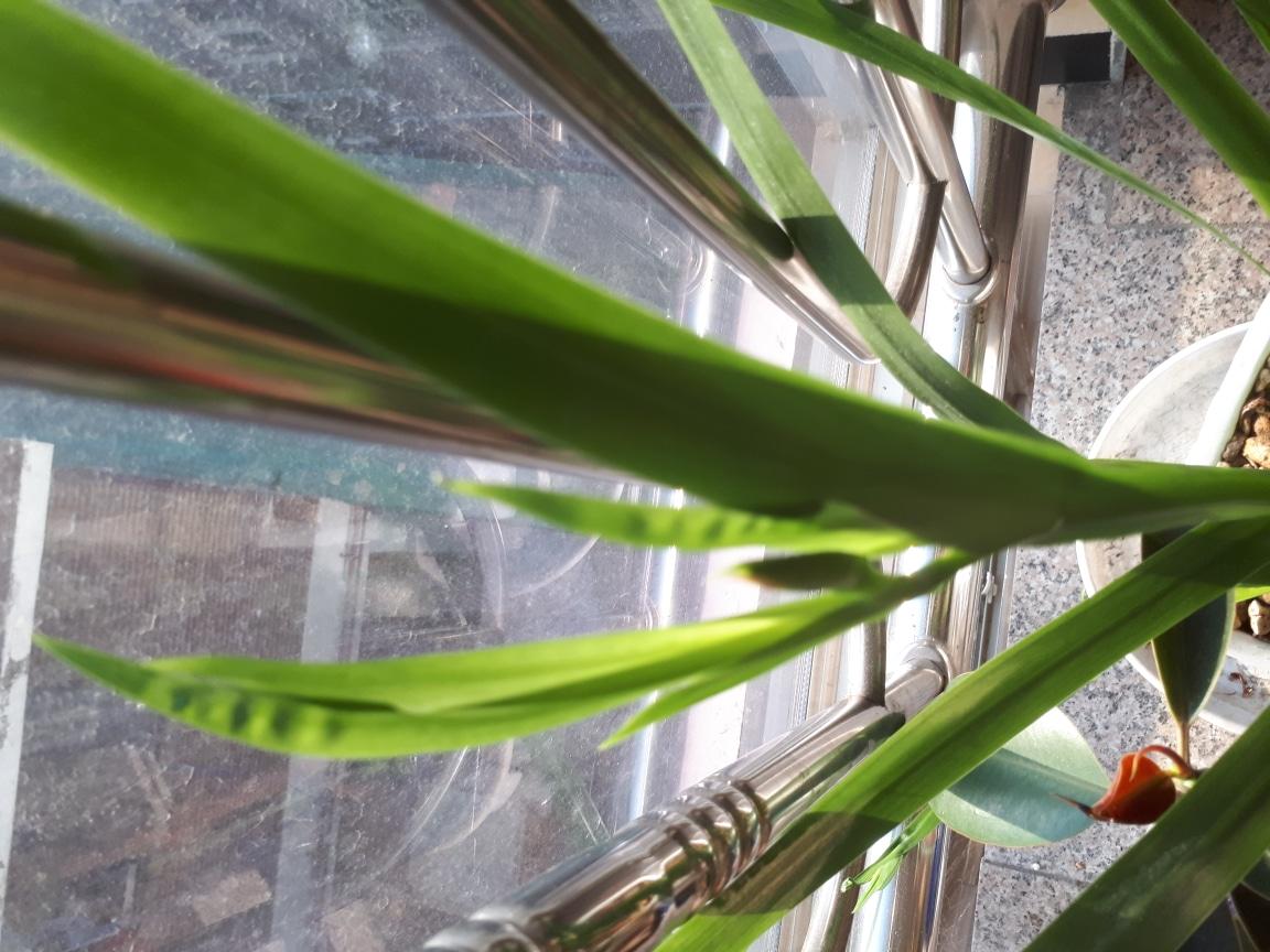 화초 (잎이 큰 화초)
