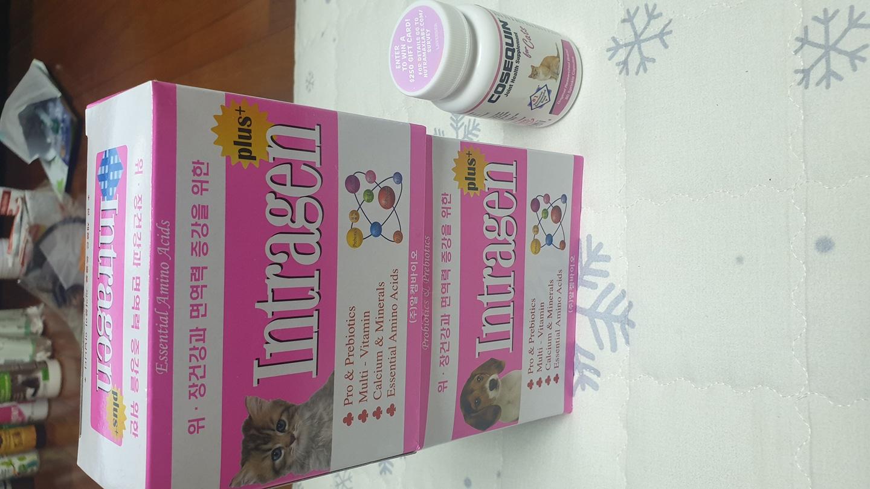 고양이 괸절코세퀸37알/고양이,강아지 유산균 인트라젠2박스