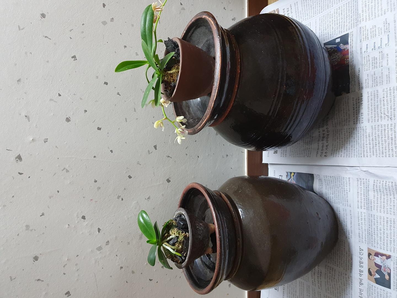 항아리2개.대엽난2개