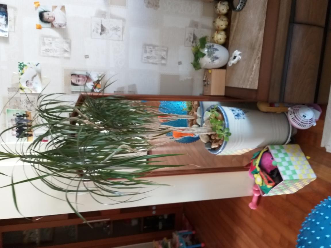 식물 이름 몰라요. 잘크고 공기정화 도움준데요