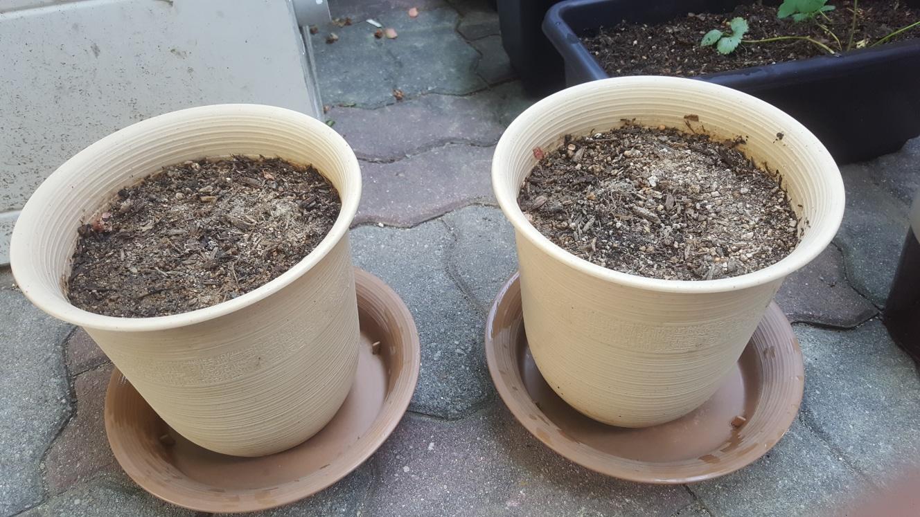 플라스틱 화분(화분+물받침+흙)