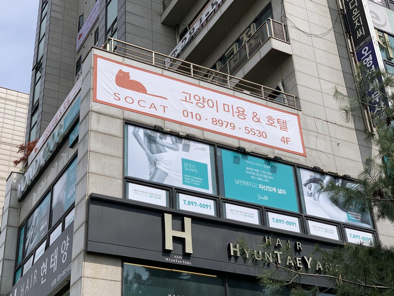 쏘캣 고양이 무마취미용&호텔