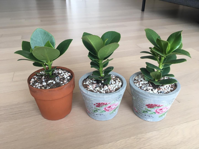 소형 크루시아 식물화분(2개)