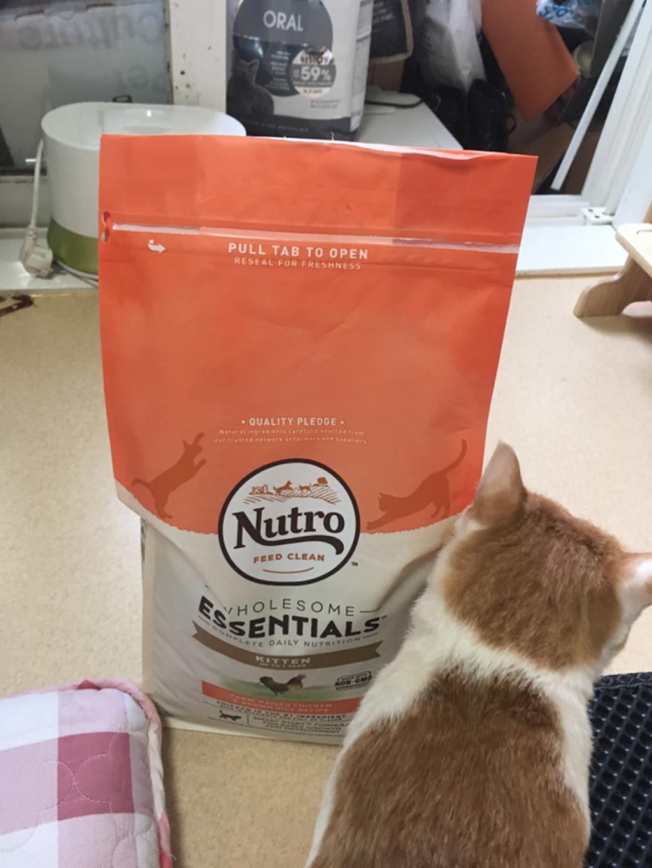뉴트로 뉴트로캣 내추럴 초이스 홀썸 에센셜 키튼 닭고기와 현미 2.95키로 고양이 사료 아깽이 1세 이하 건사료
