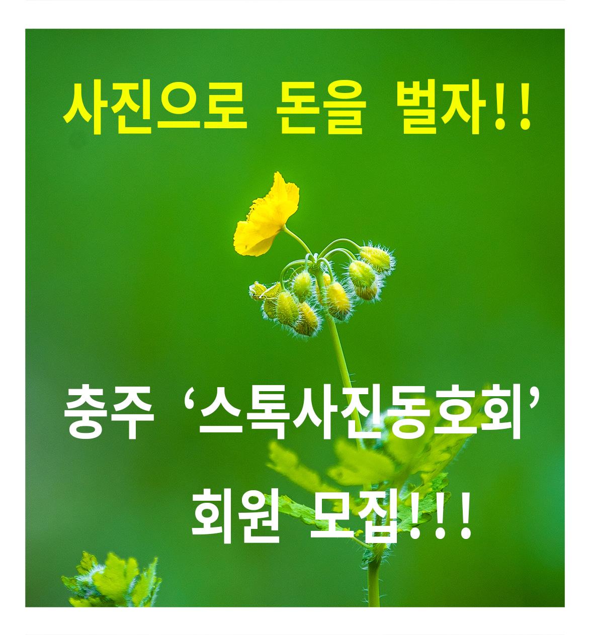 충주 스톡사진동호회 회원 모집합니다!!