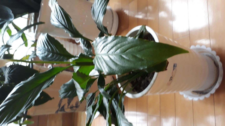 공기청정기 화초