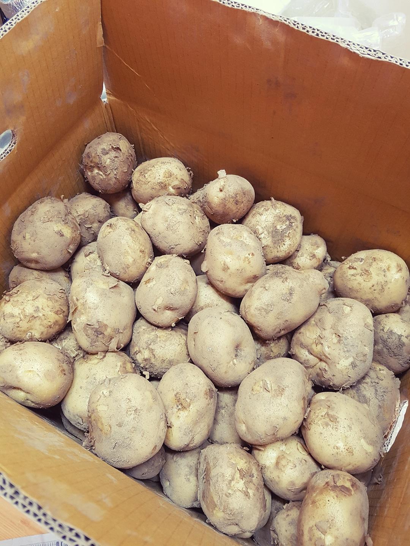 감자 /봉 1.3kg 판매합니다.