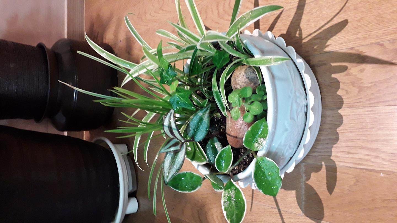 화초(공기정화 식물)