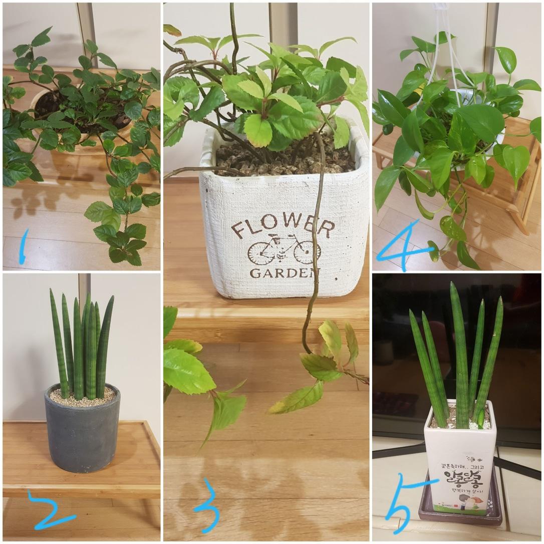 식물 화분