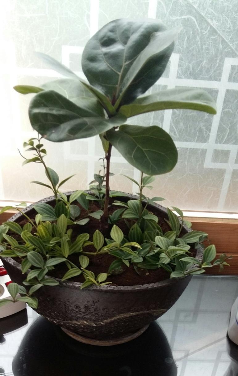 화초 화분도 멋있고 숨쉬는 화분 화초도예쁩니다~^^가로33. 세로15. 식물은 흙에서 23
