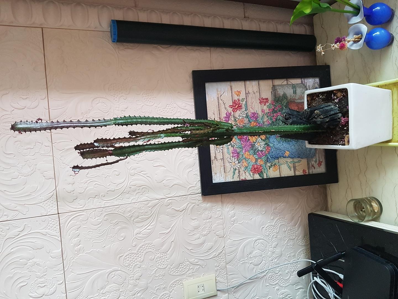 홍채각  화초 🌵🌵🌵🌵🌵