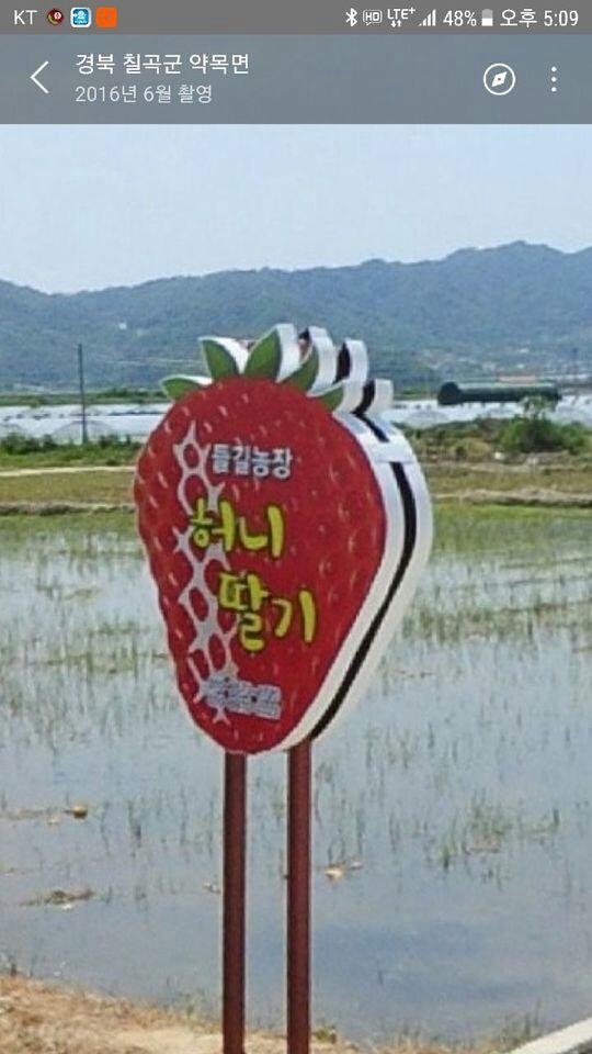 허니딸기(석적읍)